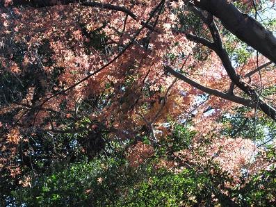 八幡宮の紅葉