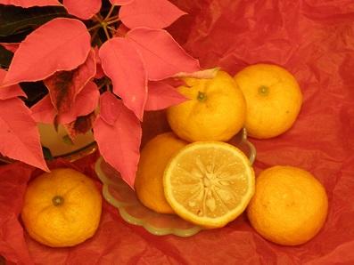 冬至に柚子湯