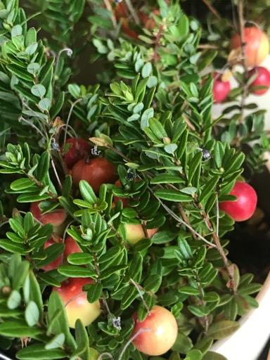 アロマテラピースクール・緑のとびら アロマライフコーチング 実りの秋