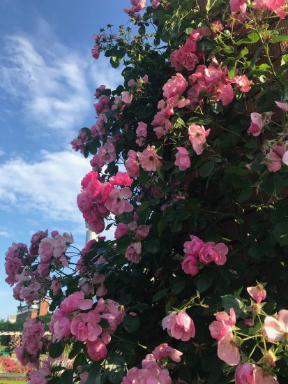 アロマテラピースクール・緑のとびら アロマライフコーチング Rosy path