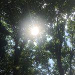 #アロマテラピースクール #緑のとびら #アロマライフコーチング #Rosypath #ヒーリング #ローズセラピー