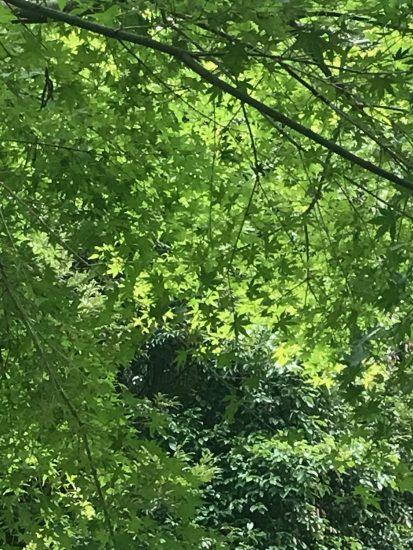 #アロマテラピースクール #緑のとびら #アロマライフコーチング #Rosypath #ヒーリング #ローズセラピー #オンラインレッスン